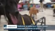 Любители на животни в Тайван правят инвалидни колички за кучета