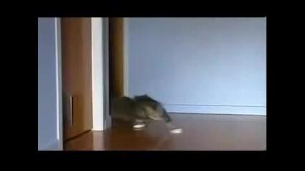 Котешки Дрифт