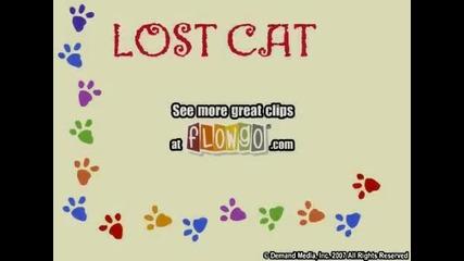 Изгубената котка