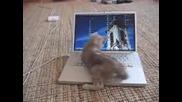 Котка и лаптоп - смешна комбинация