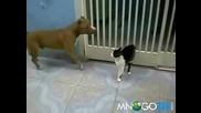 Смях ! Котката на Дарт Вейдър