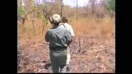 Лов - Диво Прасе 1