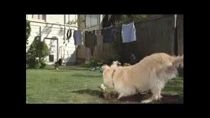 Най - умното куче 100% смях