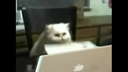 Котка работи на компютър
