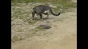 Котка срещу змия