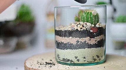 Artsy terrariums: Cactus land