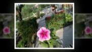 Моята пролет на село Целина music John Sokoloff