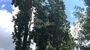 Спасиха котка от 15-метрова топола в София