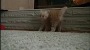 Kitten Dance...