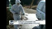В Япония започна унищожаването на над 410 000 пилета заради птичи грип