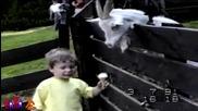Смях - Funny Animal Attack Compilation 2013