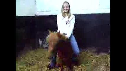 Small Pony Riding.mpg