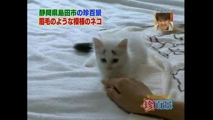 Сладко коте с вежди
