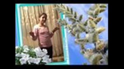 nai qkata pesen 2011