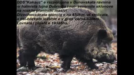 Ддскаракуз