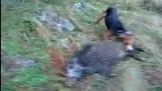 Лов на диво прасе