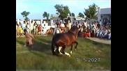Nisar Stad, Amer Nisar Khan, Korotana Festival, Horse Dancing in Pakistan