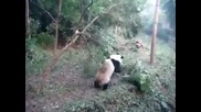 Панда на амфети - С М Я Х