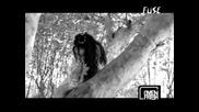 Evanescence My Imortal Превод