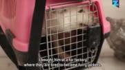 От ферма за козина до апартамент: бебе аркическа лисица