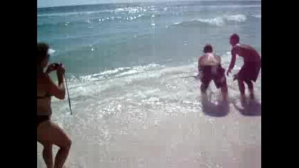 Акула Излиза На Брега На Плаж Във Флорида