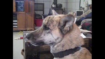 Гладно куче проговаря