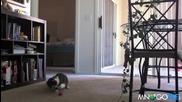 Коте Се Побърква От Рефлекси