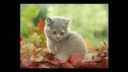 Сладки Котенца Част 2