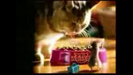 Мишка Танцува На Кючек