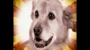 National Geographic- Какво значат кучешките изражения