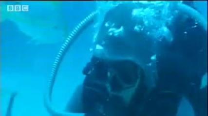 Плуване сред акулите