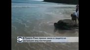 В Пуерто Рико приеха закон в защита на застрашен вид костенурки