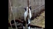 Котка прави стриптийз...! Супер смях