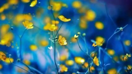 Жълти цветя ... (music by Tim Janis)