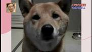 Куче лае с различна сила