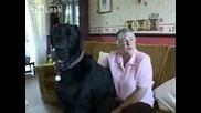Куче Тежи 103 Килограма