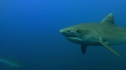 Защо акулите не могат да се разболеят?