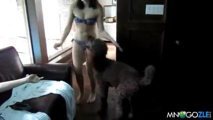 Какво ли прави кучето на мацката?
