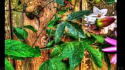 Aтлас - Есенни цветя