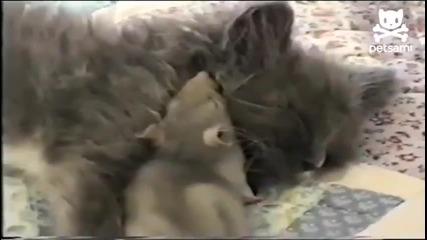 Любов между коте и мишка