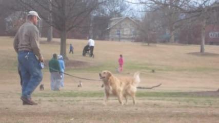 Куче се прави на мъртво, за да остане повече в парка