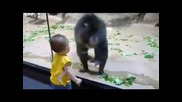 Павиан и малко дете