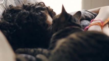 Наръчник на котки: как да се грижим за своя човек (бг субтитри)