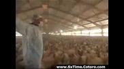 Говорещия с пуйки