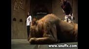 Ужасяващо ! Лъв напада жена