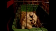 Бебе мини зайче