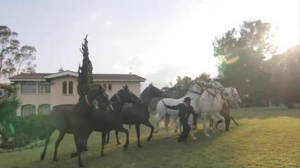 Величествените...коне!