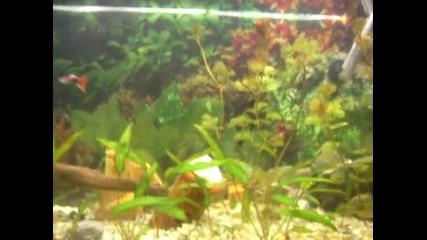 Моите рибки 2