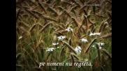 Eugen Doga - Aleea cu mesteceni