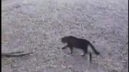 Котка vs. Aлигатор